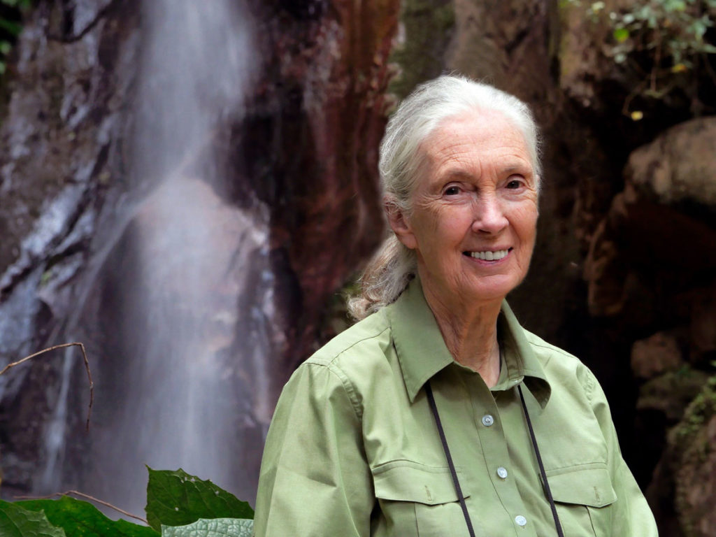 Reasons for Hope: A Virtual Discussion with Dr. Jane Goodall